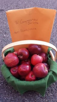 Hazleton Apples